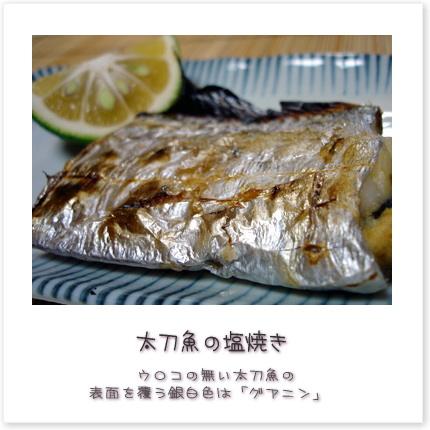 ウロコの無い太刀魚の表面を覆う銀白色は「グアニン」♪